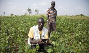 Africa mobile phone Ugandan farmer checks crops
