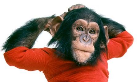 Project Nim chimpanzee language study