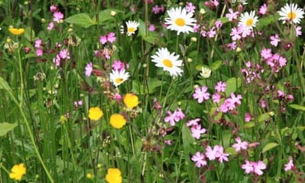 Meadows Urban Or Traditional Gardens The Guardian