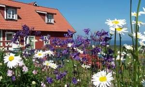 cafe-utsikten-sweden-flowers