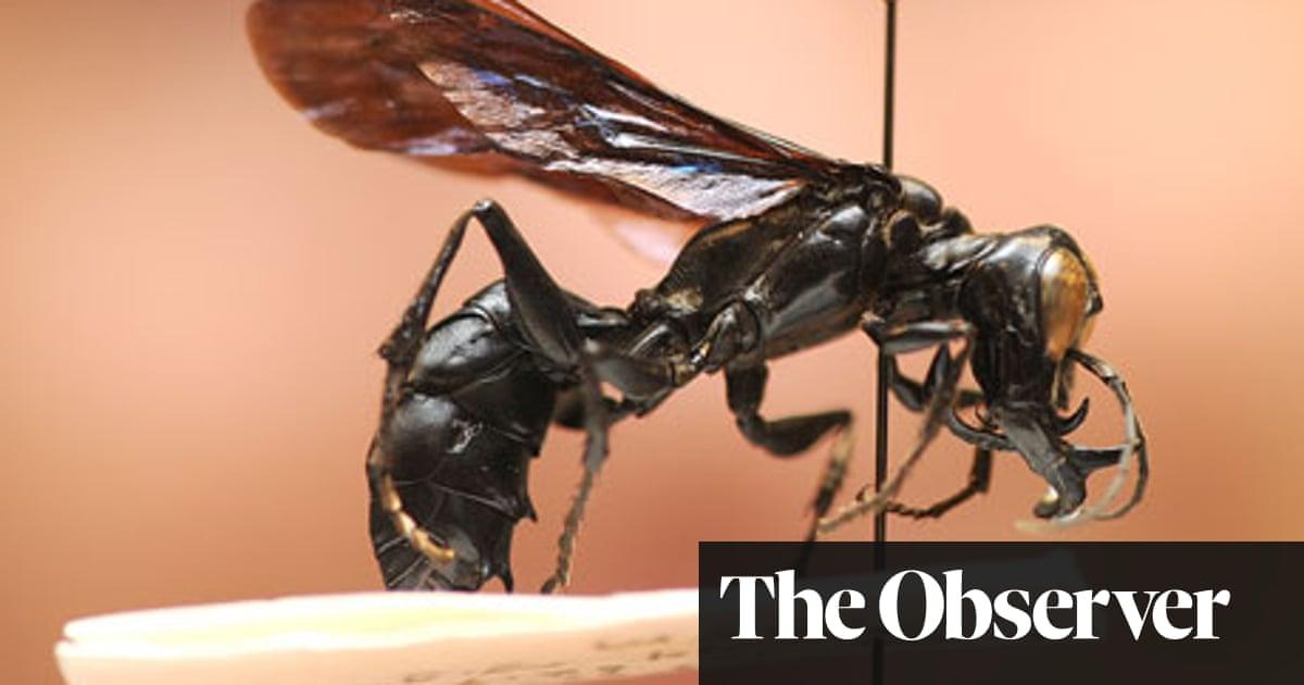 New to nature No 63: Dalara garuda | Science | The Guardian