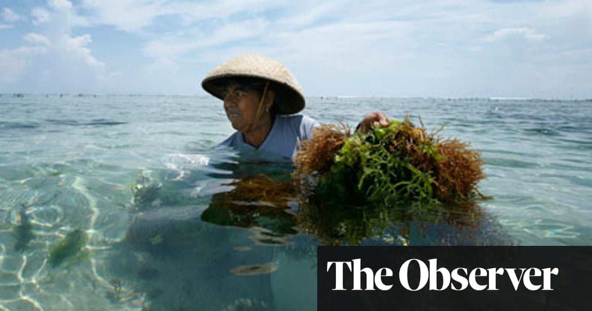 The future of food | Environment | The Guardian
