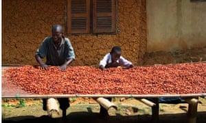 Fermented cocoa beans Ghana