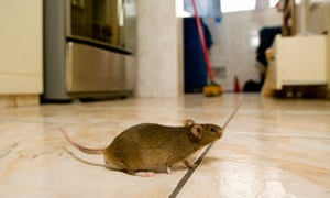 Pests that can damage your home and make a hole in your