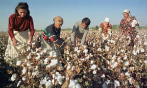 Cotton in Uzbekistan