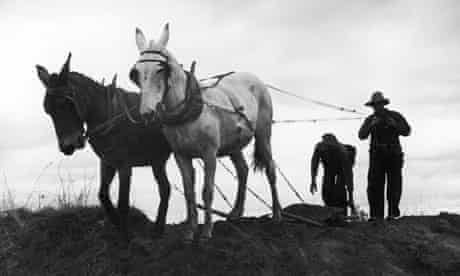 Farmers with mules in 1930s prepare the ground for spring planting.