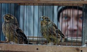 Silent Souls: still showing caged birds
