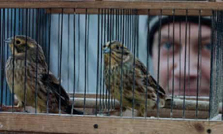 Silent Souls: still showing caged birds