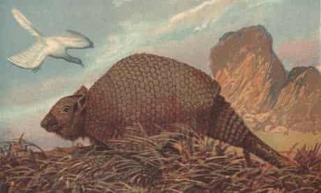 A glyptodont