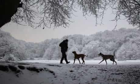 A man walks dogs in snow and ice