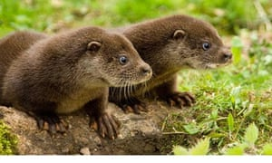 otter dating term