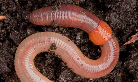 The Great Garden Worm Count Finds Our Underground Allies Are