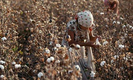 A woman in a head scarf in a field of cotton plants