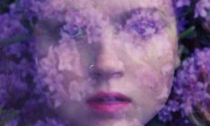 olivia bee purple haze