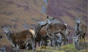 Red Deer Rutting Season Draws To A Close