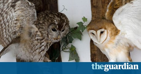 Getting Stuffed A Tale Of Love And Taxidermy David Sedaris - Meet the cuddly owl who loves landing on people