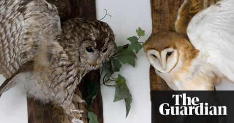 Getting stuffed a tale of love and taxidermy david sedaris books the guardian