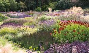 piet oudolf's garden design in Ireland
