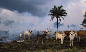 Amazon rainforest cleared for cattle pasture