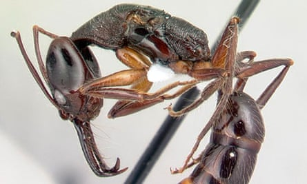 New to Nature ant