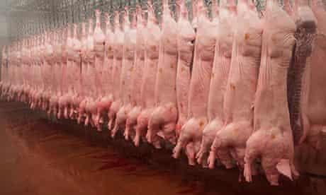 pigs abbatoire