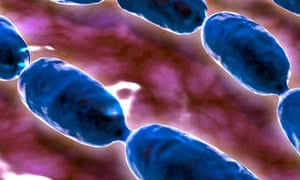 bacteria, Will Hutton