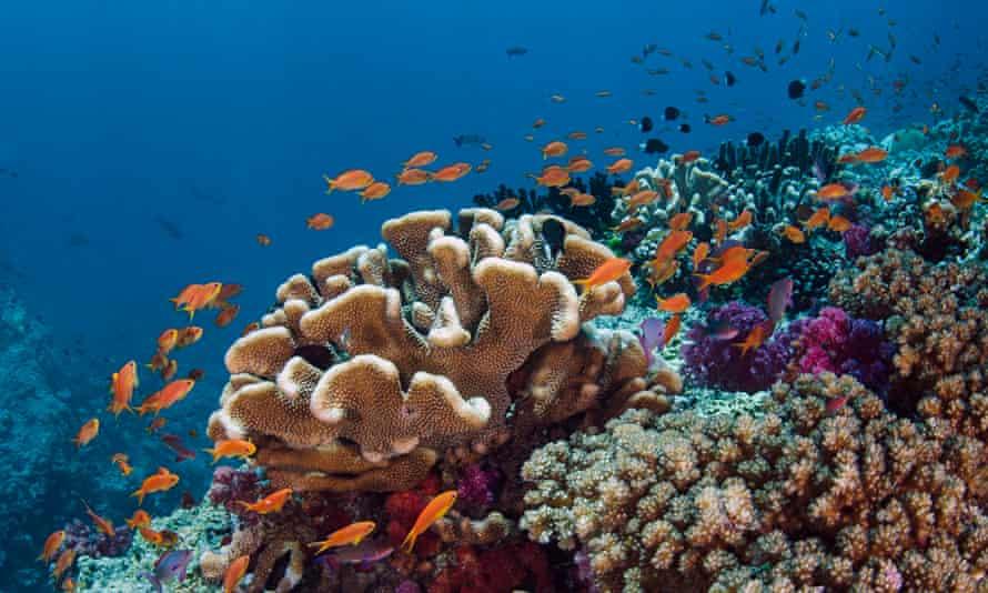 Coral reef in Fiji