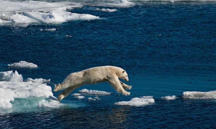 polar ice cap