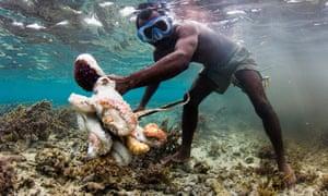 Fisherman catching octopus