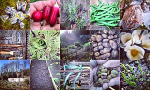homegrown produce