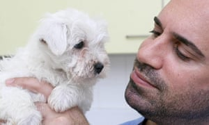 TV vet Marc Abraham examines a bichon frise/westie cross from a Welsh puppy farm.