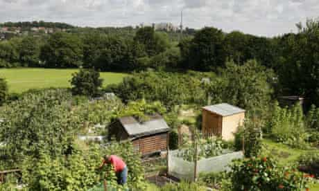 A man tending his allotment in Crouch End in north London. Photograph: David Levene