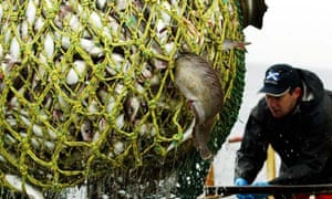 The government is urging reform of the common fisheries policy