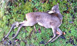Roe deer found on National Trust land in Woodchester Park
