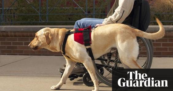 Psychiatric Assistance Dogs Australia