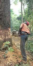 logging in Gabon