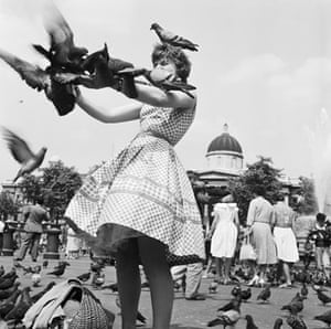 Gallery John Gay retrospective: Pigeons in Trafalgar Square, London