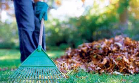 Person raking leaves in garden