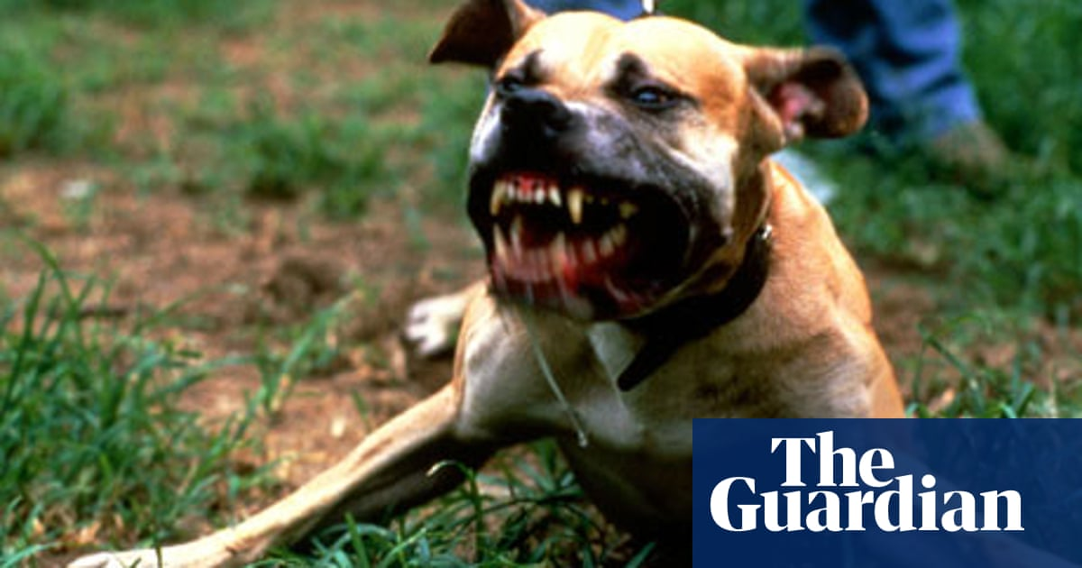 Are dogs the new weapon of choice for young people? | Society | The