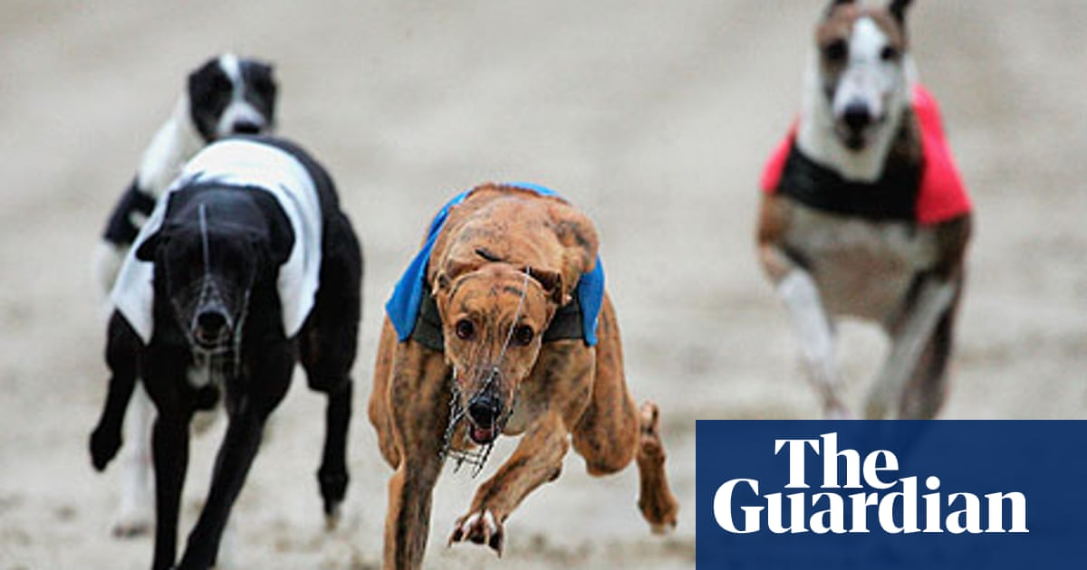 So which dog are you backing in the Greyhound Derby? | Will Hayler