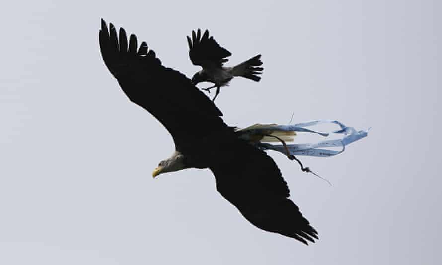 lazio eagle