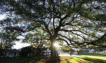 Augusta clubhouse oak tree