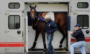 Frankel in a horsebox