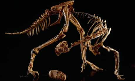 An oviraptor from Mongolia