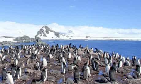 Penguins Google