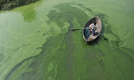 Fisherman rows a boat in the algae-filled Chaohu Lake in Hefei