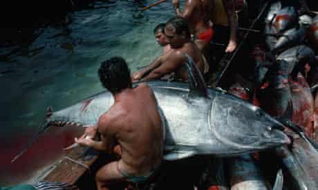Fishermen Landing Bluefin Tuna