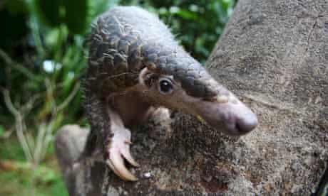 Workshop held in Singapore for conservation of pangolins