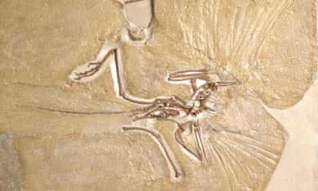 naturalarchaeopteryx