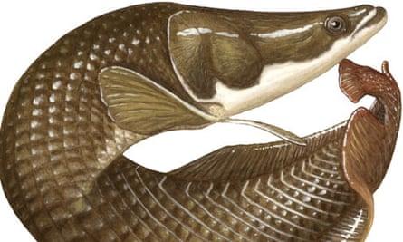 naturalfish